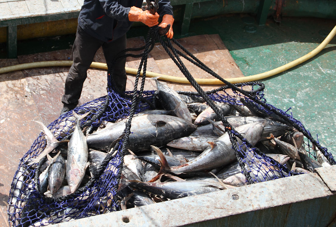 Tri Marine Group – Tuna Supply for Your Business
